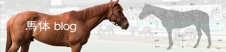 馬体ブログ